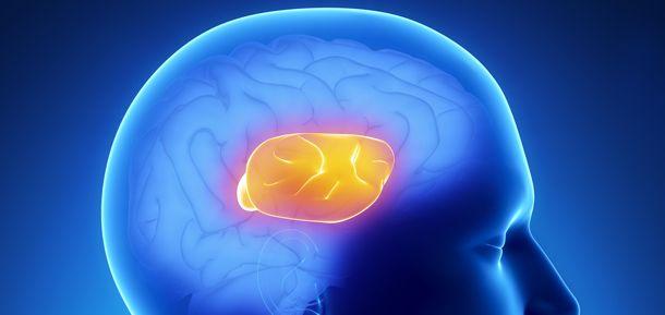 El papel del cuerpo calloso en el procesamiento visoespacial