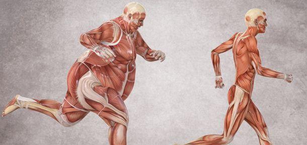 tejido adiposo multilocular grasa marrón y diabetes